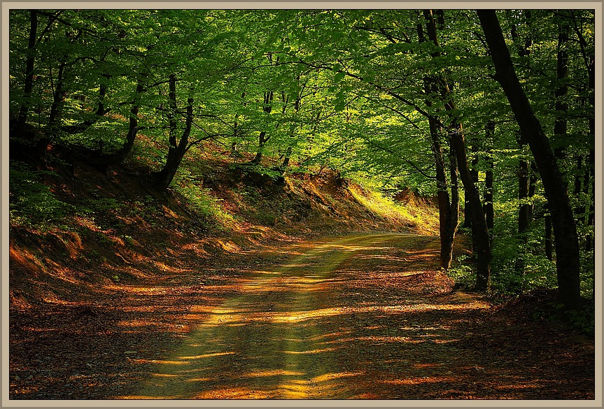 Road-in-Woods-1345716_863