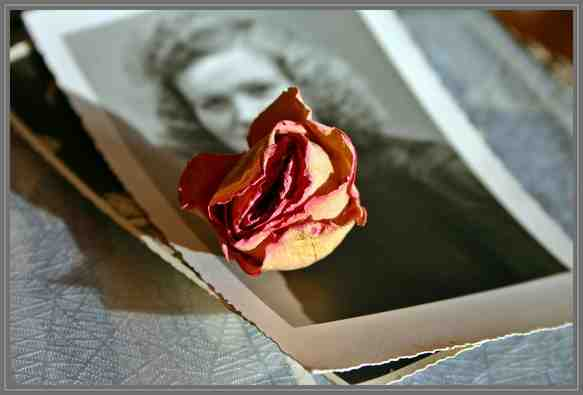 Dried Rose and Old Photo Memory
