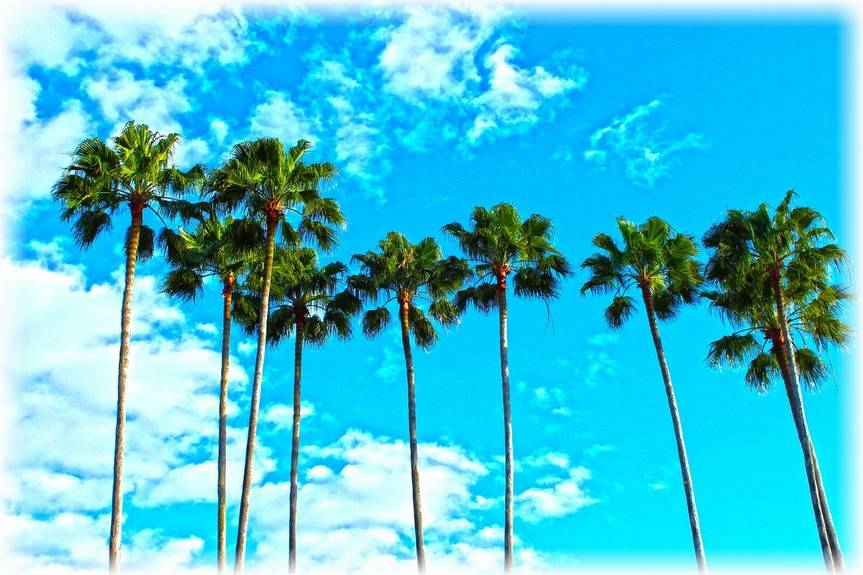 Palm trees, blue sky, white clouds