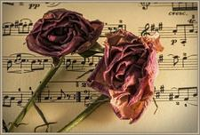 Sheet-music and roses
