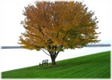 tranquil-tree+water+bench+grass